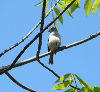 Bird (Erica Bouyouris)